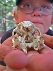 GCV3HV - trail skull