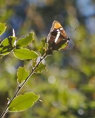 Butterfly in Castle Rock State Park