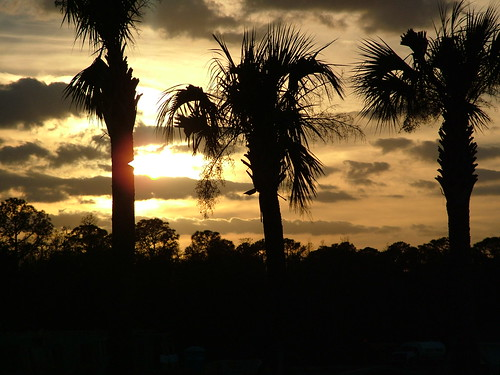 Typical Florida Image