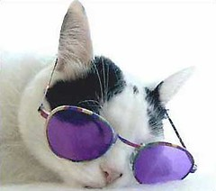 i%20dont%20do%20mornings%20catSunglasses