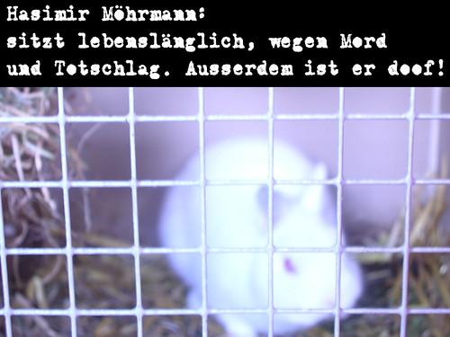 kaninchenfoto2
