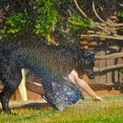 Ruby And Roger in Sprinkler