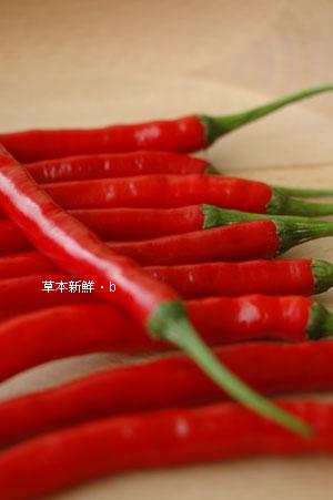 有機的辣椒