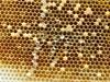 Beekeeping 2015