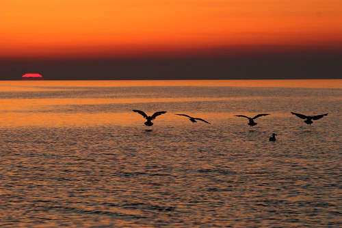 5 seagulls and sunset in Normandy,  France