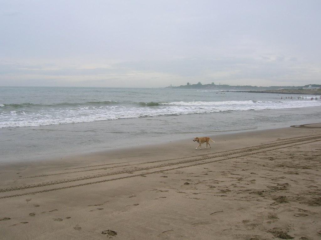 白沙灣與狗