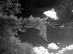 Infrared vision, Passmore Avenue (abandoned), 09