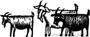 goatgruf
