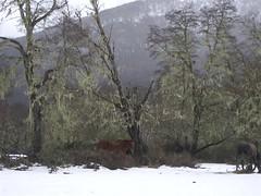 Road Trip - 23 - Caballo nieve