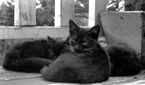 three kittens on the porch