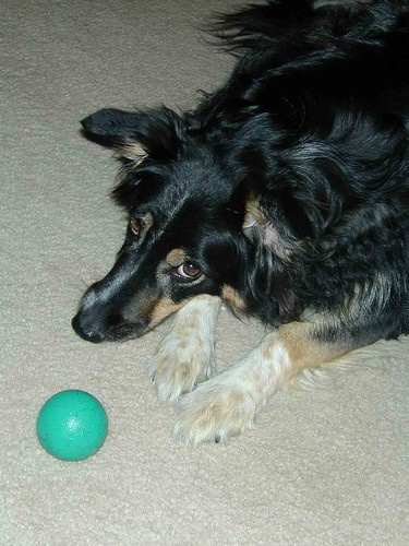 Hermione with her favorite toy - the green ball