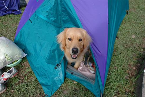 雙人帳篷+麵線01