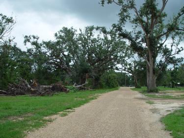 missi-trees