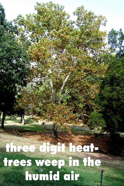 threedigitheat2