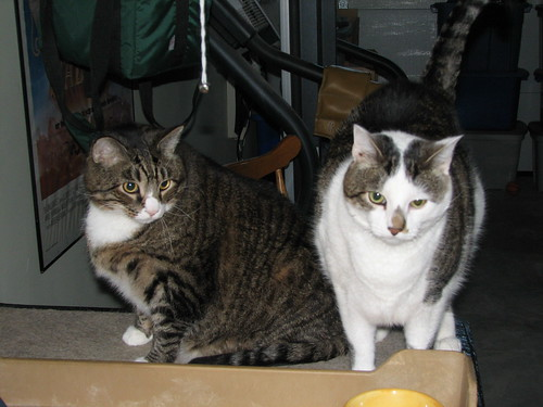 Stashu and Shamus