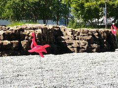 Flamingo in the foreground