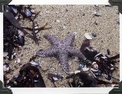 Jess' starfish