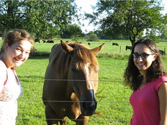 horsey!