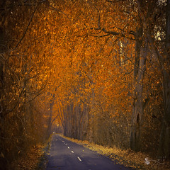 road of gold - EXPLORE #1 - 01/02/12 photo by ildikoneer