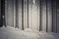 Czech Forest in Winter photo by Brave Lemming