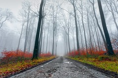 Damp Forest photo by Martin..D