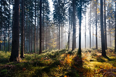 morning sun in the forest photo by skoeber