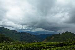 Beautiful Munnar [explored-15-december-2011] photo by pankaj.anand