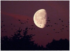 Flying to the moon photo by litla