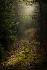 The path photo by ulfbjolin