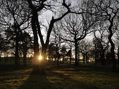 TREEHENGE photo by kenny barker