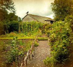Vegetable Garden photo by vesna1962