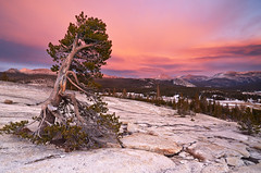 Day After Day - Pothole Dome, Tuolumne Meadows, Yosemite National Park photo by Joshua Cripps