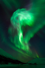 Aurora mushroom photo by TerjeLM