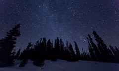 Tall Timber and Stars photo by dlanglois2