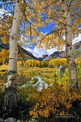 Portrait of Autumn in the Sierra Nevada photo by Darvin Atkeson