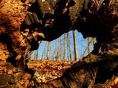 View Thru a Dead Tree photo by Maureclaire