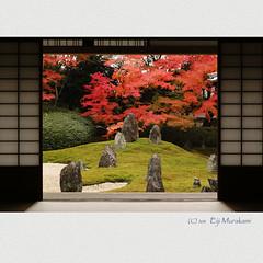 光明院 紅葉 photo by Eiji Murakami