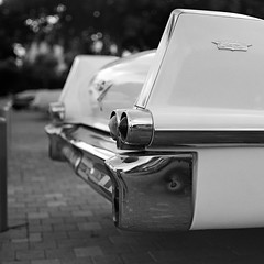 Caddy fins photo by Ilya.Bur