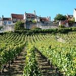 Vezelay vineyard
