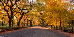 The Mall - Central Park photo by Jack Fusco