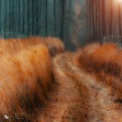 gold of grass photo by ildikoneer