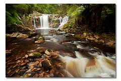 Halls Falls, Tasmania, Australia photo by Matthew Stewart | Photographer