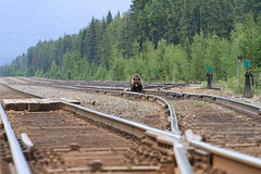 Black Bear in railway track looking for lost grain photo by Remco Ophof