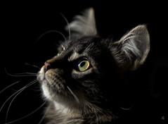 My Cat, Graffiti, in Sunlight photo by [natali]