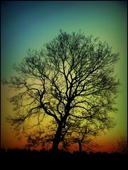 amazing tree photo by sillitilly
