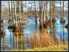 Cypress swamp photo by Suzanham