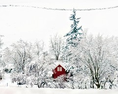 Snowed In {Explore Front Page} photo by Darrell Wyatt