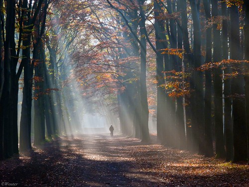 Sunrays . photo by Wouter van Wijngaarden