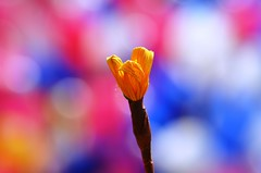 Colors Of Bokeh photo by anindya55