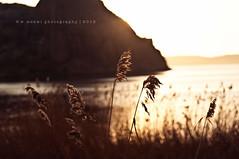 [2/52] ~ Backlighting photo by w.mekwi photography